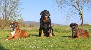 Greta, Boskop, Isabell
