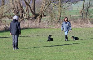 y x B mit zwei Hunden 071 - Kopie